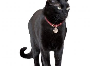 Cat Leather Collar Image