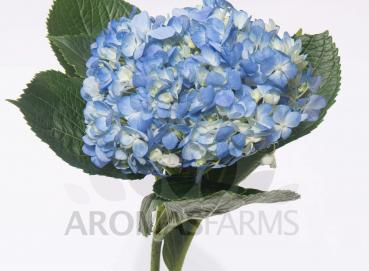 "HYD SELECT BLUE EURO 6"" Image"