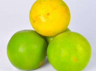 VALENCIA ORANGE (CITRUS X SINENSIS) Image