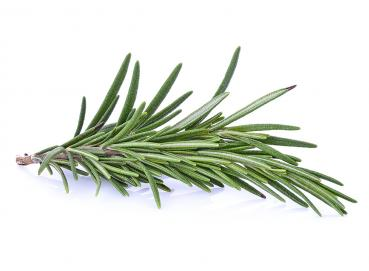 Fresh Rosemary Image