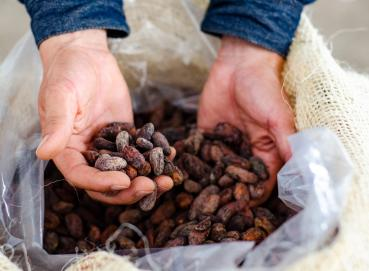 dry cocoa  Image